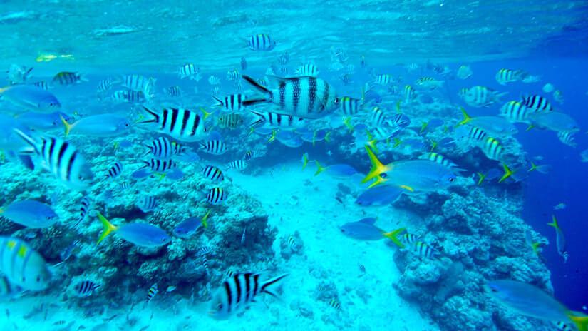 パラオダイビングの観光スポットビッグドロップオフの魚たち