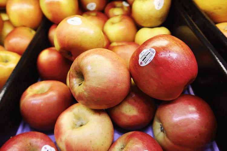 パラオWCTCのりんご
