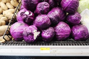 パラオWCTCの紫キャベツ